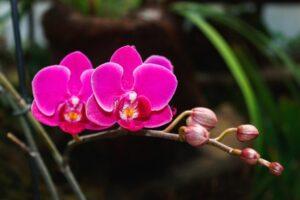 Преимущества орхидеи